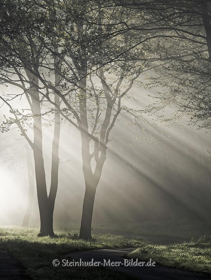 Nebel-Morgennebel-Morgenstimmung-Morgenlicht-Steinhuder Meer-B_NIK_0099