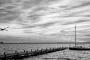 schwan-fliegender-bilder-schwarz-weiß-landschaften-steinhuder-meer-fotos-Panorama-E_O1I2052a-1-sw