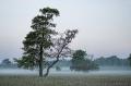 Landschaftsfotos-Naturfotos-Hagenburg-Nebel-Morgennebel-Steinhuder Meer-Naturpark-Landschaft-B_DSC1425 Kopie-1