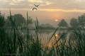 Landschaftsfotos-Naturfotos-Hagenburg-Steinhuder Meer-Naturpark-Landschaft-AXO1I7930a-1