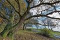 Landschaftsfotos-Naturfotos-Eiche-Mardorf-Steinhuder Meer-Naturpark-Landschaft-A_NIK2961-1