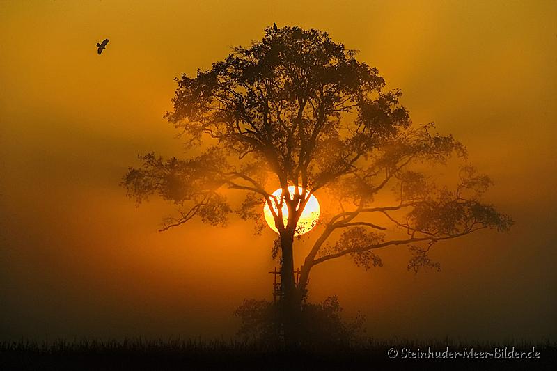 Meerbruchwiesen-Meerbruchswiesen-Landschaftsfotos-Naturfotos-Nebel-Morgennebel-Sonnenaufgang-Meerbruch-Steinhuder-Meer-Naturpark-Landschaft-BXO1I0269a-1