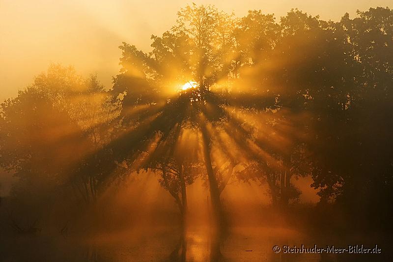 Meerbruchwiesen-Meerbruchswiesen-Landschaftsfotos-Naturfotos-Nebel-Morgennebel-Sonnenstrahlen-Meerbruch-Steinhuder-Meer-Naturpark-Landschaft-BXO1I1016-1