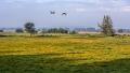 Meerbruchwiesen-Meerbruchswiesen-Landschaftsfotos-Naturfotos-Enten-Stockenten-Meerbruch-Steinhuder-Meer-Naturpark-Landschaft-AXO1I8042b-1