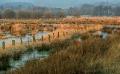 Meerbruchwiesen-Meerbruchswiesen-Landschaftsfotos-Naturfotos-Meerbruch-Steinhuder-Meer-Naturpark-Landschaft-A_DSC8348-1