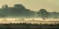Meerbruchwiesen-Meerbruchswiesen-Landschaftsfotos-Naturfotos-Nebel-Morgennebel-Meerbruch-Steinhuder-Meer-Naturpark-Landschaft-AXO1I7856-1