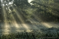 Meerbruchwiesen-Meerbruchswiesen-Landschaftsfotos-Naturfotos-Sonnenstrahlen-Morgennebel-Nebel-Meerbruch-Steinhuder-Meer-Naturpark-Landschaft-DXO1I3174-1
