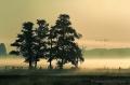 Meerbruchwiesen-Meerbruchswiesen-Landschaftsfotos-Naturfotos-fliegende-Graugaense-Gaense-Meerbruch-Steinhuder-Meer-Naturpark-Landschaft-AXO1I7846-1