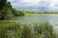 Landschaftsfotos-Naturfotos-Seerosen-Ostenmeer-Steinhuder Meer-Naturpark-Landschaft-B_DSC3795-1