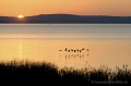 Landschaftsfotos-Naturfotos-Sonnenuntergang-Graugaense-fliegende-Ostenmeer-Steinhuder Meer-Naturpark-Landschaft-BXO1I2562-1