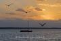 wolken-himmel-idyllisch-moewen-auswanderer-abendstimmung-sonnenuntergang-bilder-landschaften-steinhuder-meer-fotos-B_NIK_3163