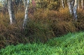 Landschaftsfotos-Naturfotos-Birken-Totes-Moor-Steinhuder Meer-Naturpark-A_NIK2370-1