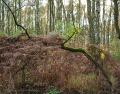 Landschaftsfotos-Naturfotos-Farn-Totes-Moor-Steinhuder Meer-Naturpark-A_NIK1650-1