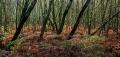 Landschaftsfotos-Naturfotos-Farn-Totes-Moor-Steinhuder Meer-Naturpark-A_NIK1772-1