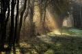 Landschaftsfotos-Naturfotos-Nebel-Morgennebel-Sonnenstrahlen-Wunstorfer-Damm-Totes-Moor-Steinhuder Meer-Naturpark-A_NIK2334-1