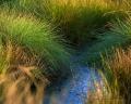 Landschaftsfotos-Naturfotos-Tuempel-Moortuempel-Totes-Moor-Steinhuder Meer-Naturpark-A_NIK2191-1