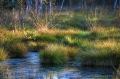 Landschaftsfotos-Naturfotos-Tuempel-Moortuempel-Totes-Moor-Steinhuder Meer-Naturpark-A_NIK2195-1