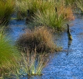 Landschaftsfotos-Naturfotos-Tuempel-Moortuempel-Totes-Moor-Steinhuder Meer-Naturpark-A_NIK2234-1