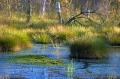 Landschaftsfotos-Naturfotos-Tuempel-Moortuempel-Totes-Moor-Steinhuder Meer-Naturpark-A_NIK2242-1