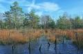 Landschaftsfotos-Naturfotos-Tuempel-Moortuempel-Totes-Moor-Steinhuder Meer-Naturpark-A_NIK2391-1
