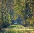 Landschaftsfotos-Naturfotos-Wunstorfer-Damm-Totes-Moor-Steinhuder Meer-Naturpark-A_NIK2209-1