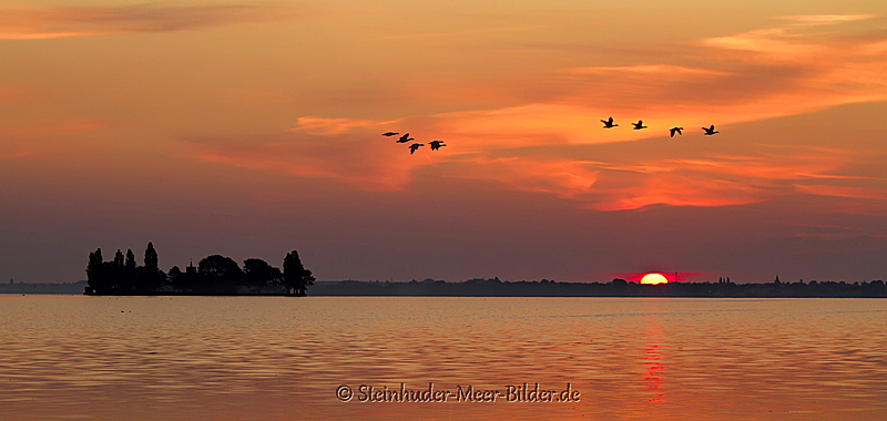 Landschaftsfotos-Naturfotos-Gaense-Graugaense-fliegende-Voegel-Wasservoegel-Morgenrot-Morgenstimmung-Westenmeer-Winzlar-Steinhuder Meer-Naturpark-7-B_MG_8759-1