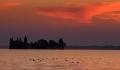 Landschaftsfotos-Naturfotos-fliegende-Voegel-Wasservoegel-Morgenrot-Morgenstimmung-Westenmeer-Winzlar-Steinhuder Meer-Naturpark-7-B_MG_8728-1