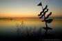 Fotos-Bilder-Landschaftsfotos-Naturfotos-Abendstimmung-Abendrot-Steinhude-Steinhuder Meer-Naturpark-Landschaft-AXO1I7001-1