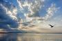 Fotos-Bilder-Landschaftsfotos-Naturfotos-Moewe-fliegende-Silhouette-Abendstimmung-Abendrot-Steinhude-Steinhuder Meer-Naturpark-Landschaft-A_NIK0219-1