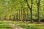 Gelderland-Sonnen-Schein-Licht-Fruehling-Gelderland-Allee-Niederlande-C_NIK_8839 Kopie