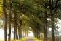 Gelderland-Sonnenstrahlen-Allee-Baum-Baeume-Herbst-Niederlande-C_NIK_1130b Kopie
