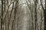 Gelderland-Winter-Alleen-Baum-Baeume-Schnee-Niederlande-C_NIK_7777 Kopie