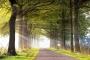 allee-baeume-gelderland-herbst-faerbung-Sonnen-Strahlen-Licht-Schein-Niederlande-C_NIK_1117b Kopie