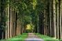 allee-baeume-gelderland-herbst-faerbung-Niederlande-C_NIK_1578a Kopie
