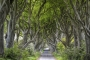 dark-hedges-giants-causeway-allee-maerchenwald-mystische-baeume-Irland-A_NIK4626a