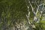 dark-hedges-giants-causeway-allee-maerchenwald-mystische-baeume-Irland-A_SAM4306a