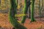 wald-baeume-gelderland-herbst-faerbung-Niederlande-C_NIK_2862 Kopie