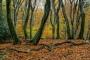 wald-baeume-gelderland-herbst-faerbung-Niederlande-C_NIK_2865 Kopie