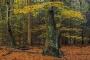 wald-baeume-gelderland-herbst-faerbung-Niederlande-C_NIK_2867 Kopie