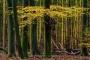 wald-baeume-gelderland-herbst-faerbung-Niederlande-C_NIK_2966 Kopie