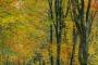wald-baeume-gelderland-herbst-faerbung-Niederlande-C_NIK_3075 Kopie