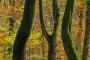 wald-baeume-gelderland-herbst-faerbung-Niederlande-C_NIK_3081 Kopie