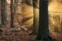 wald-sonnenstrahlen-nebel-baeume-maerchenwald-mystische-herbst-faerbung-Niedersachsen-C_NIK_2788a Kopie
