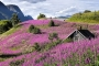 landschaft-Norwegen-rot-blumen-huette-sognefjord-E_O1I2859-a