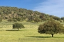 landschaft-Extremadura-Dehesas-baum-baeume-Spanien-A_DSC9436a
