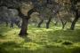 landschaft-Extremadura-Dehesas-baum-baeume-Spanien-A_DSC9690a