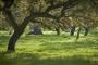 landschaft-Extremadura-Dehesas-baum-baeume-Spanien-A_DSC9753a