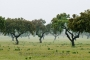 landschaft-Extremadura-Dehesas-baum-baeume-Spanien-A_DSC9994