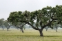 landschaft-Extremadura-Dehesas-baum-baeume-Spanien-B_DSC0005a