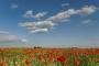 landschaft-Mohn-Klatschmohn-Feld-rot-Oesterreich-blauer-himmel-AXO1I0138a